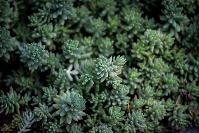 Sedum green roof consisting of various types of succulents