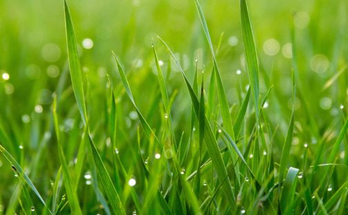 Artificial Grass: A Worthwhile Investment?